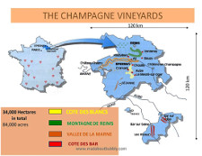 champagne wine yards